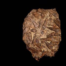 Fossil by Stuart Harrison