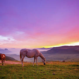 Four Horses Grazing On The Grass At by Moreiso