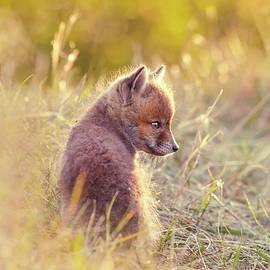 Roeselien Raimond - Fox Kit Series - Cuteness in Foxcoat