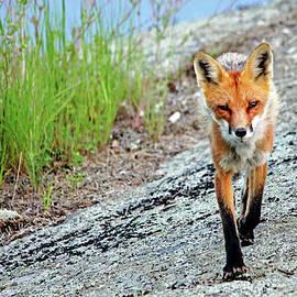 Foxy by Debbie Oppermann