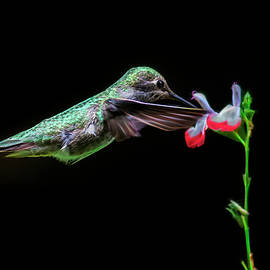 Fractal Green Anna Hummingbird by Wes and Dotty Weber