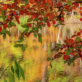 Framed Reflection by Jack Peterson