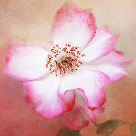 Free Form Rose by Terry Davis