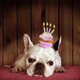 French Bulldog With Birthday Cupcake by Retales Botijero