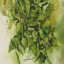 Fresh Green Beans  by Alfred Ng