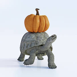 Betsy Knapp - Friends The Tortoise and the Pumpkin