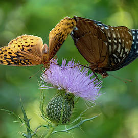 Fritillaries by Lucy Banks
