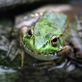 Frog Prince by Christina Rollo