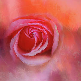 Frosted Red Rose by Terry Davis