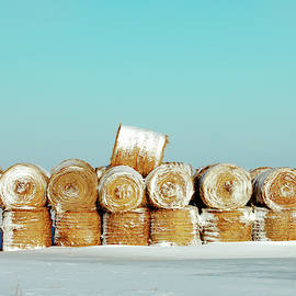 Frosted Wheats by Todd Klassy