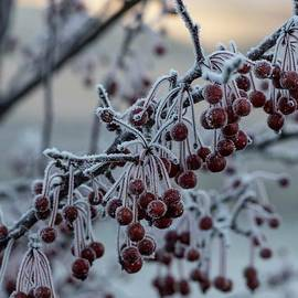 Frozen Crabapples by David Bearden
