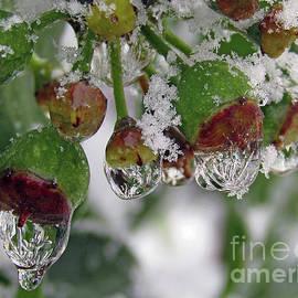 Frozen Drops by Kim Tran