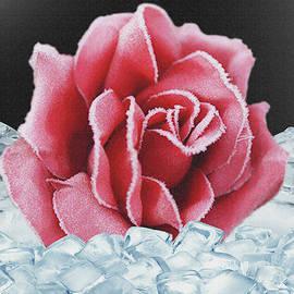 Frozen Rose by Dennis Buckman