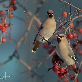 Charlaine Jean - Fruit salad for Bohemian Waxwing