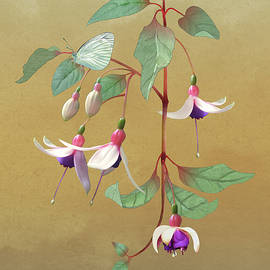 Fuchsia and Butterfly by Spadecaller
