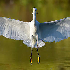 Full Flaps. by Paul Martin