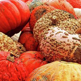 Funky Pumpkins by Debbie Oppermann