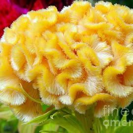 Garden Blooms #2 by Ed Weidman