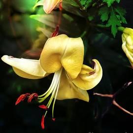 Garden Surprise by Jenny Revitz Soper