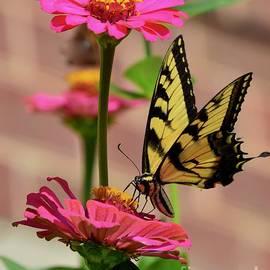 Garden Visitor by Gayle Deel