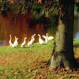 Steve Karol - Gathering Geese