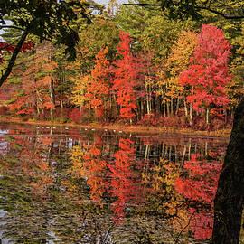 Geese On Quabbin Reservoir by Jeff Folger