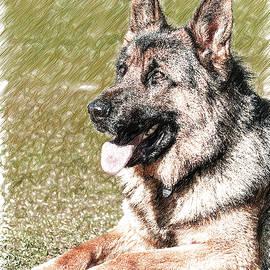 German Shepherd Dog - DWP1350428 by Dean Wittle