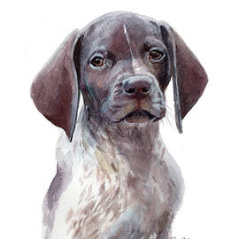 German Shorthaired Pointer Pup by Emily Olson