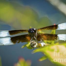 Get A Grip 2 Dragonfly Close Up Art by Reid Callaway
