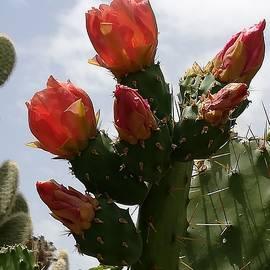 Giant Cactus Portrait by Loretta S