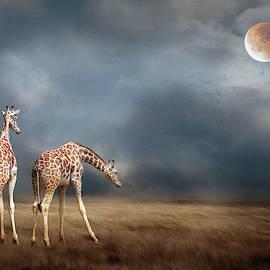 Rebecca Cozart - Giraffes