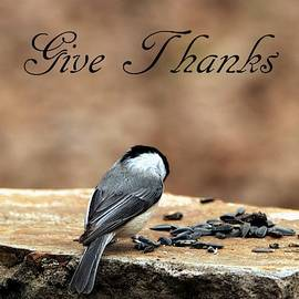 Give Thanks by Sheila Brown