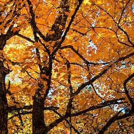 Karen Wiles - Glorious Autumn