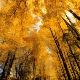 Glory Trail by Jim Love