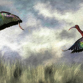 Glossy Ibis Lift Off by Donna Kennedy