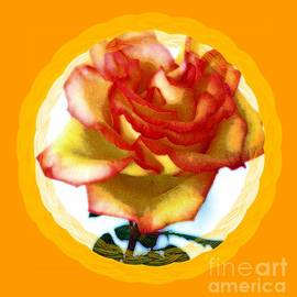 Glow of a Special Rose by Barbie Corbett-Newmin