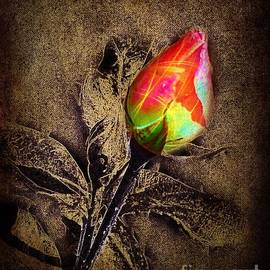Glowing Rose by David Neace