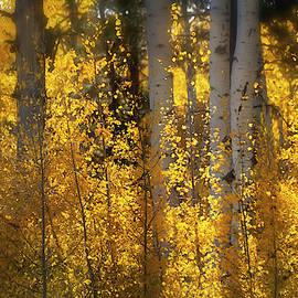 Golden Aspen Abstract  by Saija Lehtonen
