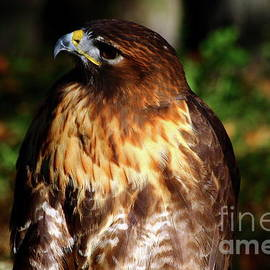 Golden Eagle Portrait by Christiane Schulze Art And Photography