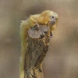 Golden Lion Tamarin by Michelle Meenawong