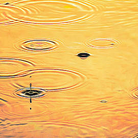 Golden Teardrops by Trish Tritz