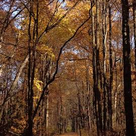 Golden Trail by Jeremy Lyman