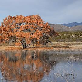 Golden tree on pond by Jack Nevitt