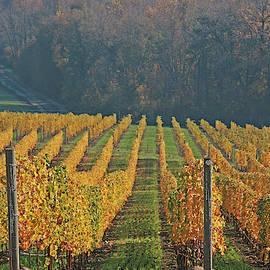 Golden Vineyard by Leslie Struxness
