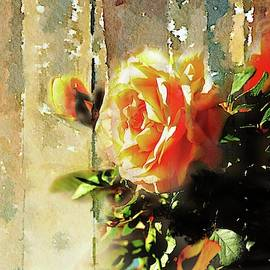 Golden Yellow Rose by Linda Cox