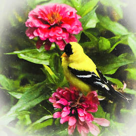 Goldfinches Love Zinnias by Ola Allen
