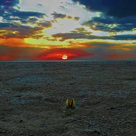 Gongbung Beach Sunset And Open Shell by Joan Stratton