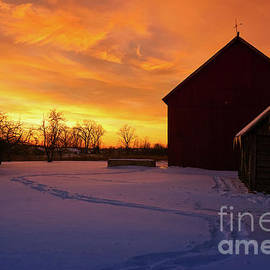Goodnight Farm by Rachel Cohen