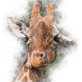 Giraffe Portrait #2 by Patti Deters