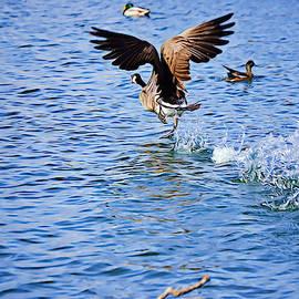 Gaby Ethington - Goose Walking on Water